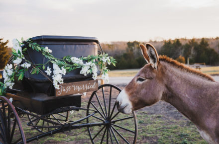 The HIlls of Luella | Wedding Venue in Sherman, TX