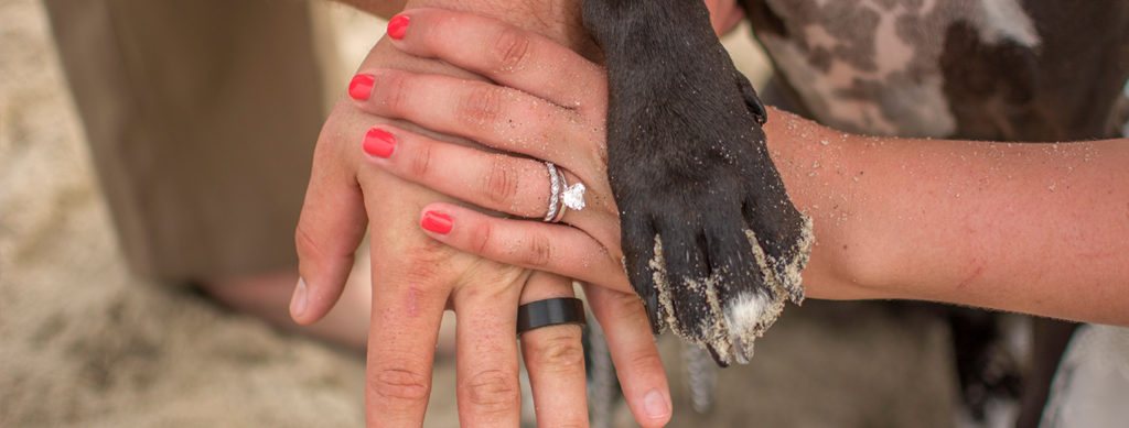 The 5 Best Ways to Include Pets in your Wedding | On the Texoma Bride Guide Blog